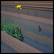 Yellow flower and steel beams