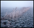 Berijpt riet in Klunder, Thesinge - Frosted reeds in a polder, Thesinge